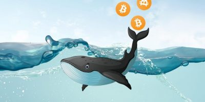 Bitcoin Whales: Everything You Need to Know